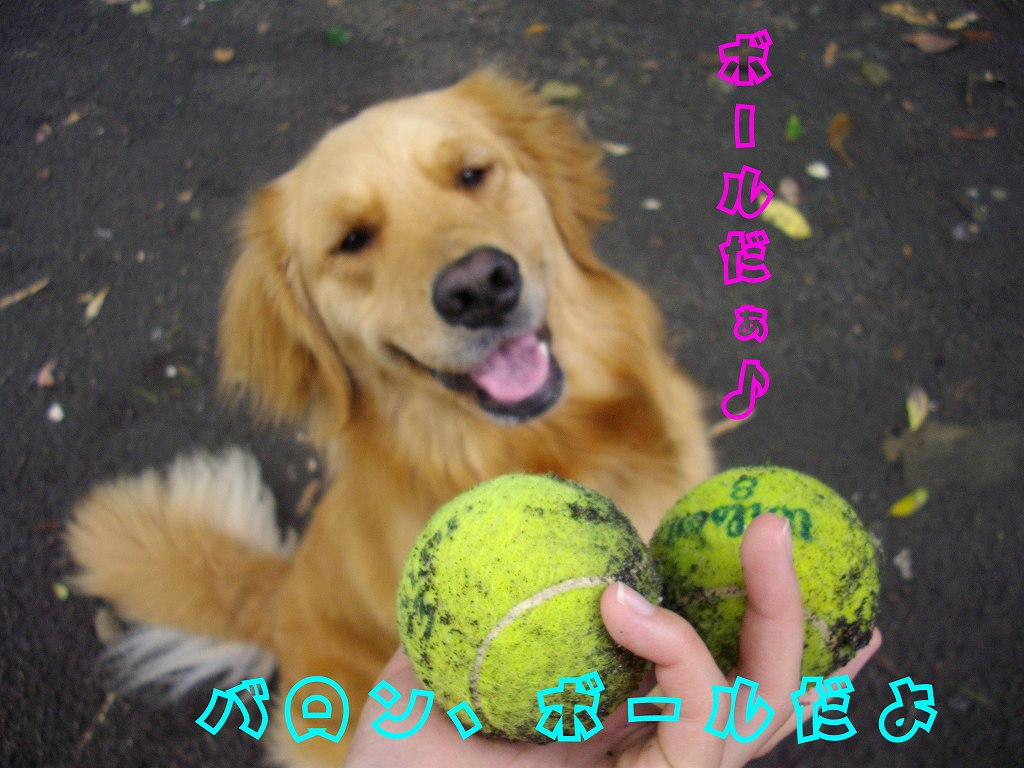 ボールだぁ