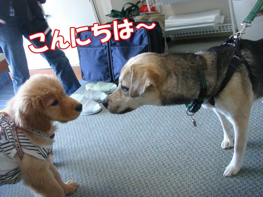 クレアちゃん&ココちゃん