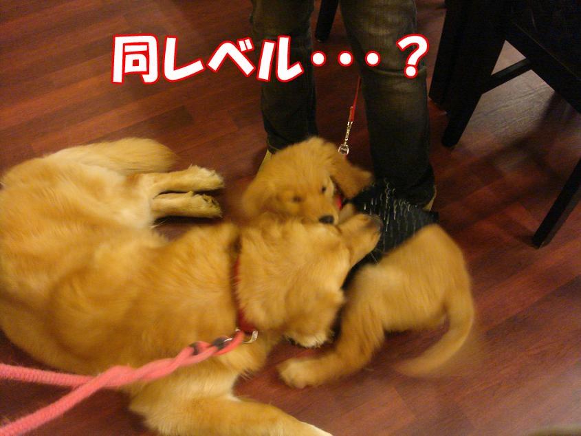 バロン&クレアちゃん2
