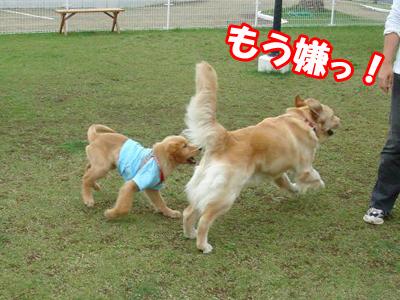 くるみちゃん&クレア4