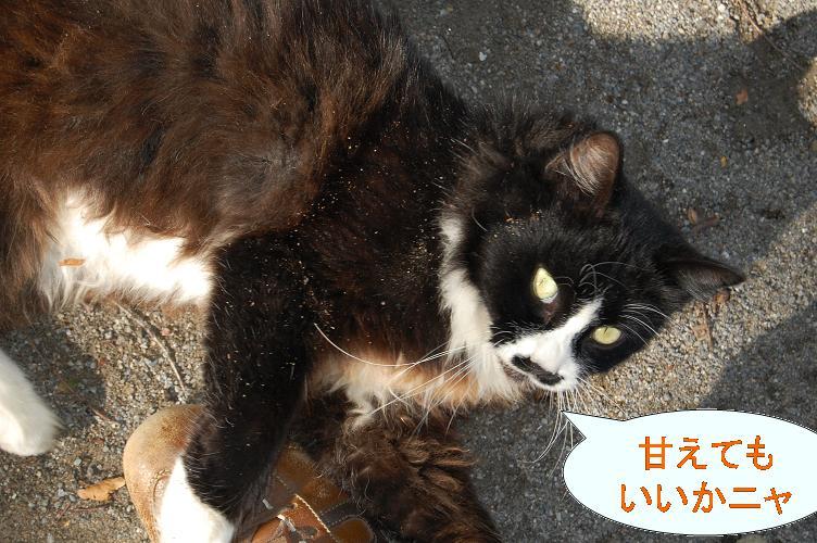 野良猫?.jpg