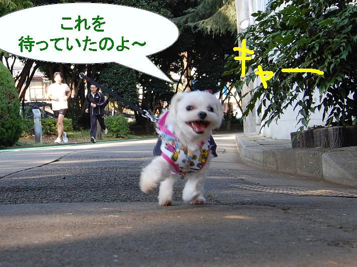 散歩スタート.jpg
