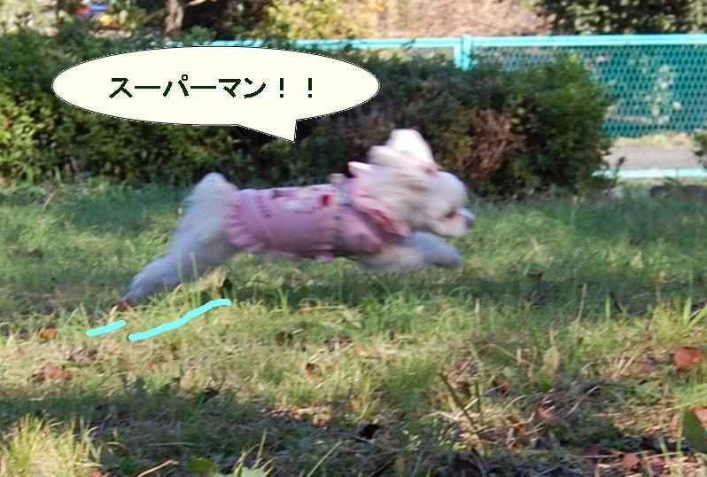 空飛ぶワンコ.jpg