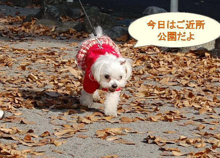 落ち葉の公園.jpg