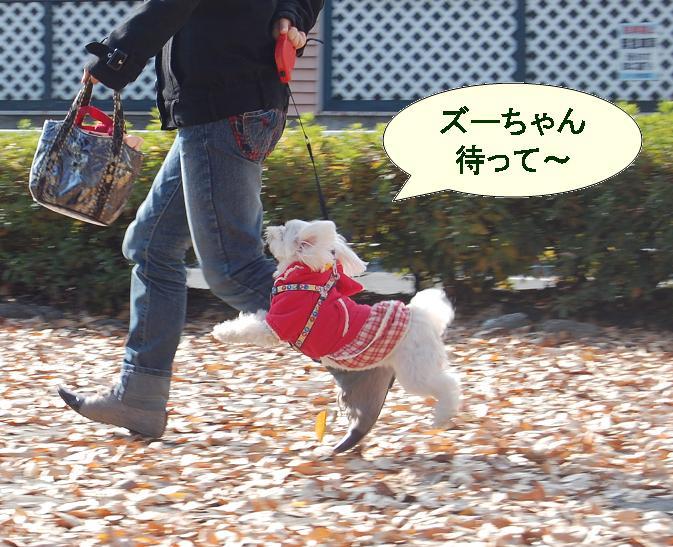 ズーちゃん追いかける.jpg