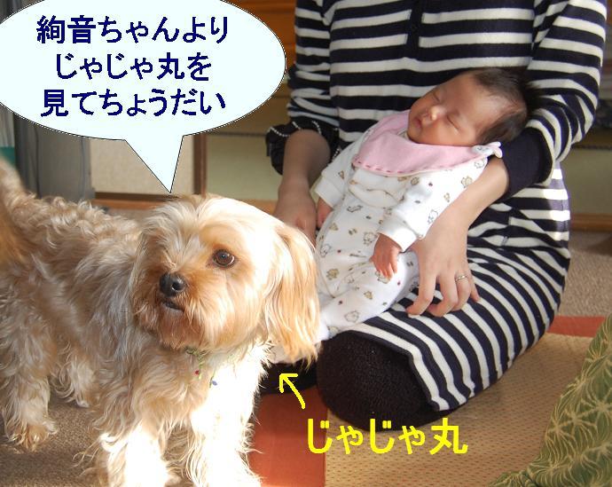 いとこワンコ.jpg