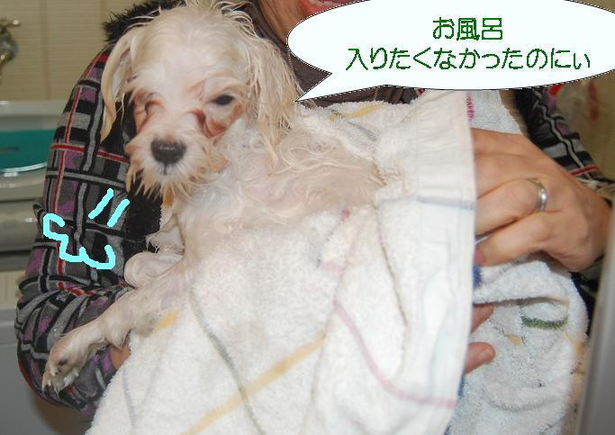 なおの不満顔.jpg