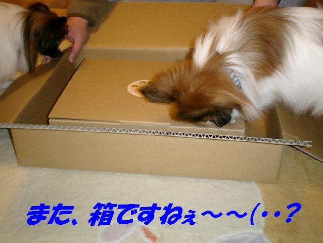 また箱ですねぇ〜.jpg