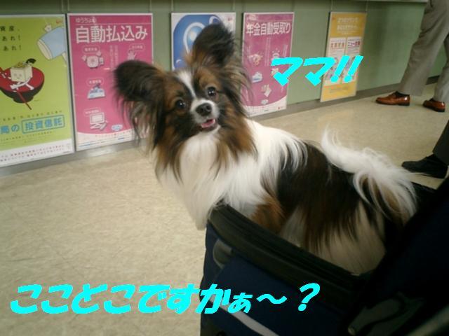 ここどこですか〜?.jpg