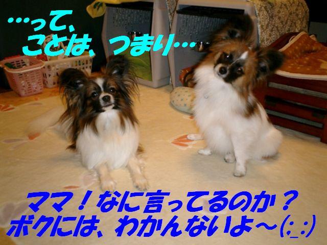 わかんないよ〜(;_:).jpg