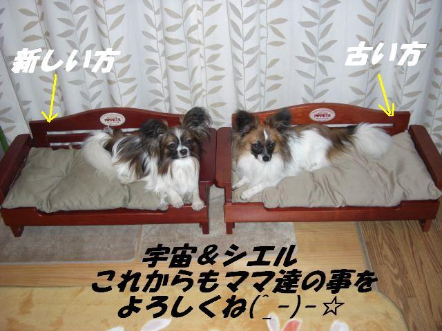 よろしくね(^_-)-☆.jpg