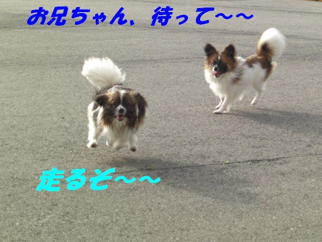 走るぞ〜.jpg