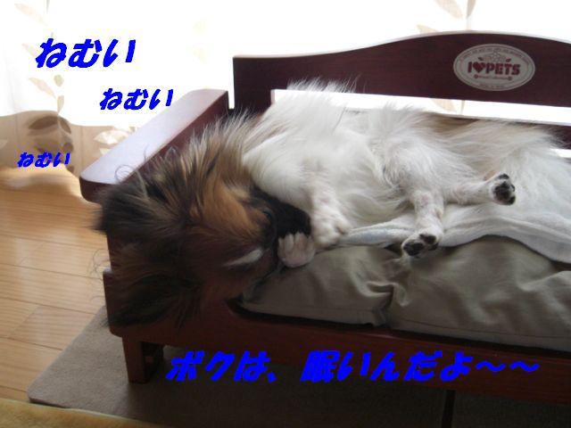 眠いんだよ〜.jpg