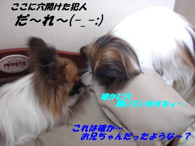 だ〜れ〜(-_-;).jpg
