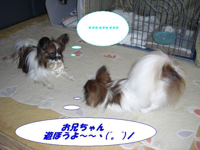 遊ぼうよ〜.jpg