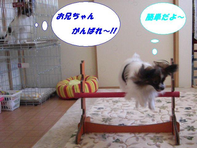お兄ちゃん、がんばれ〜.jpg