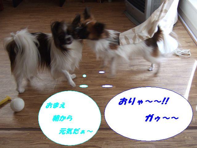 おりゃ〜〜.jpg
