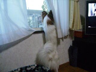 2006.12.19窓の外を・・・