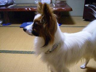 2007.4.11名古屋に行った1