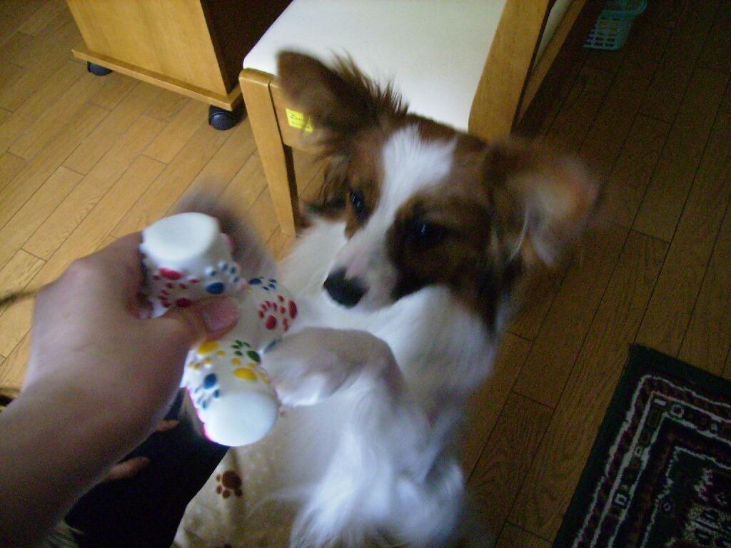 2007.5月新しいおもちゃ3