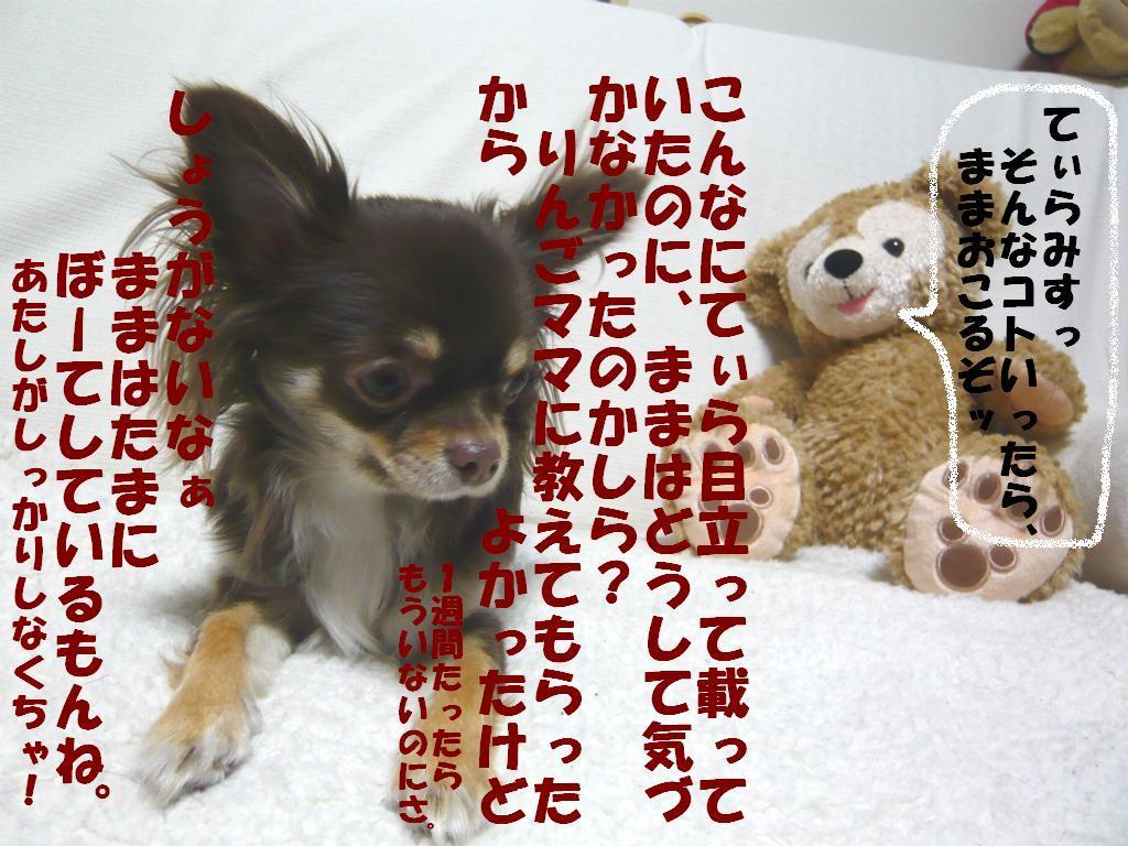 1233037055191101.jpg