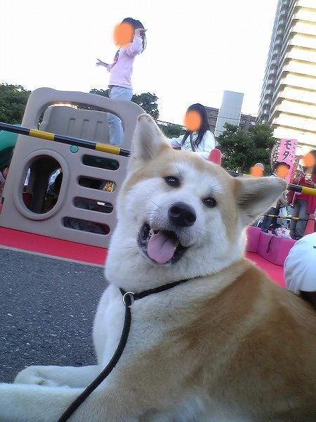 所沢お祭り2