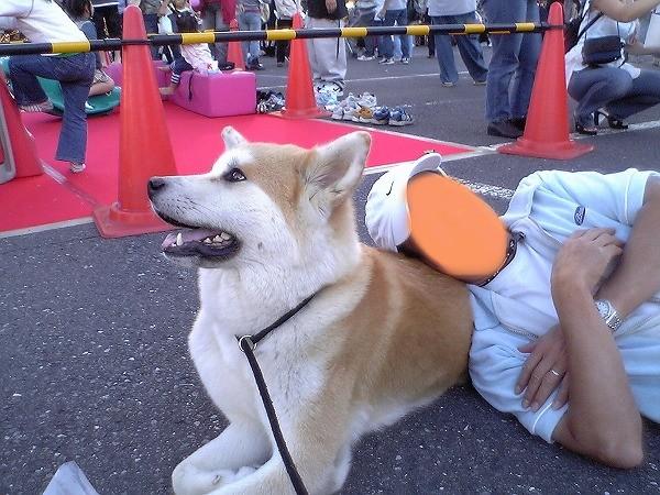 所沢お祭り3