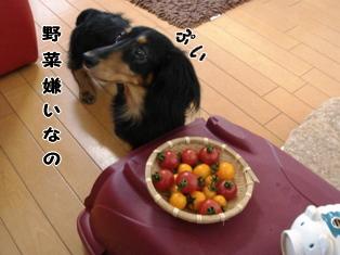 2007070203.jpg