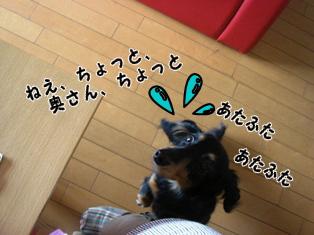 2007071002.jpg