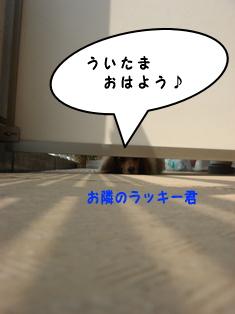 2007083003.jpg