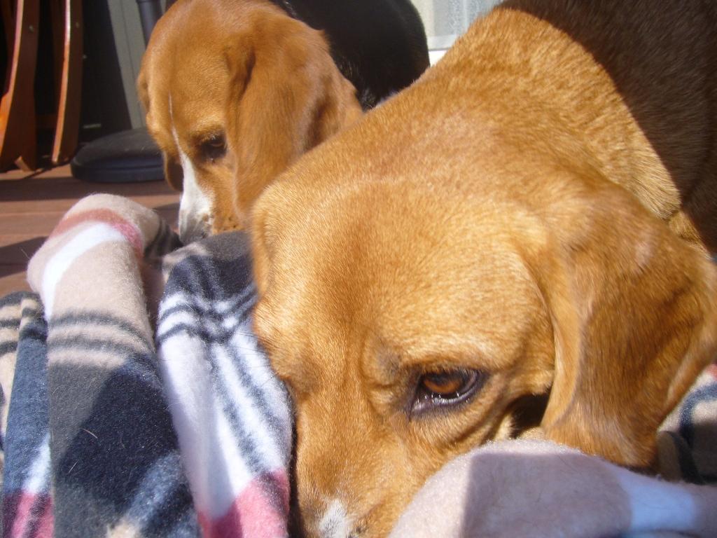 ママ!これ、私達の毛布だよぉ〜◆