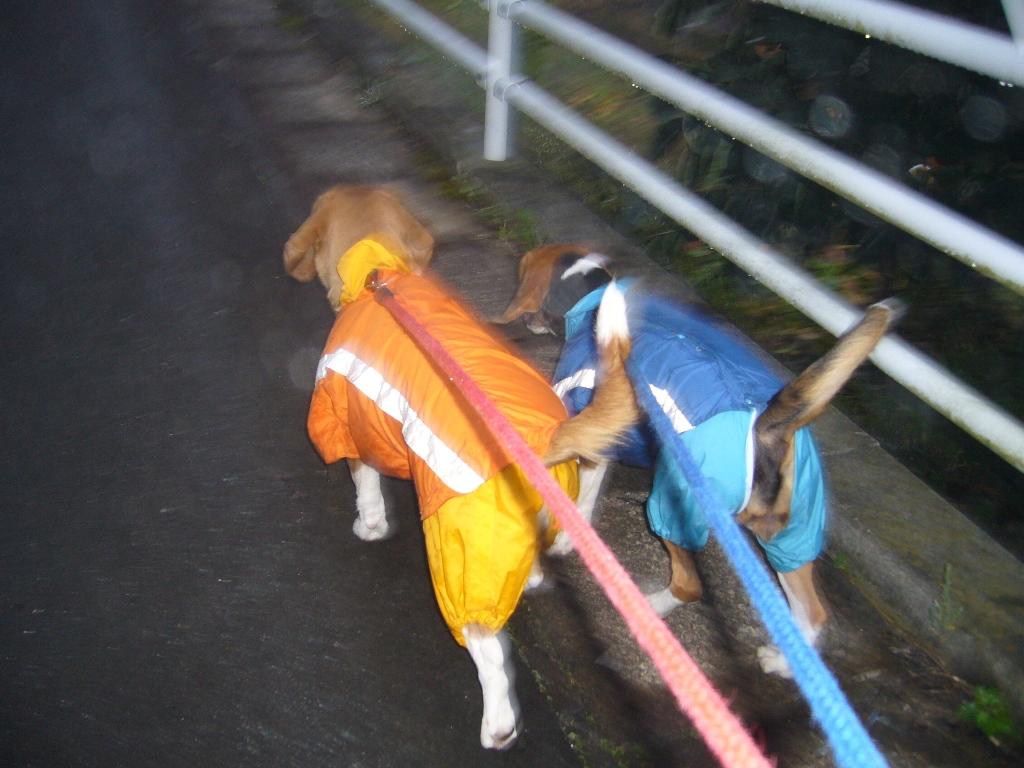 仲良くお散歩ネ☆