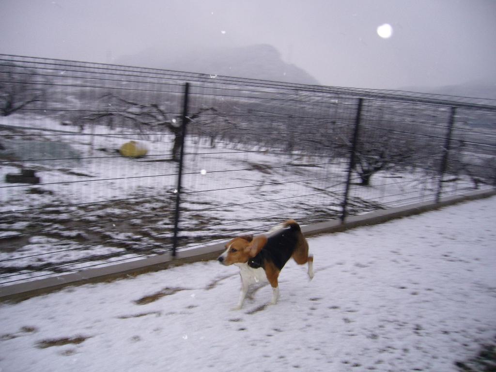 わぁーい、雪よぉ〜!