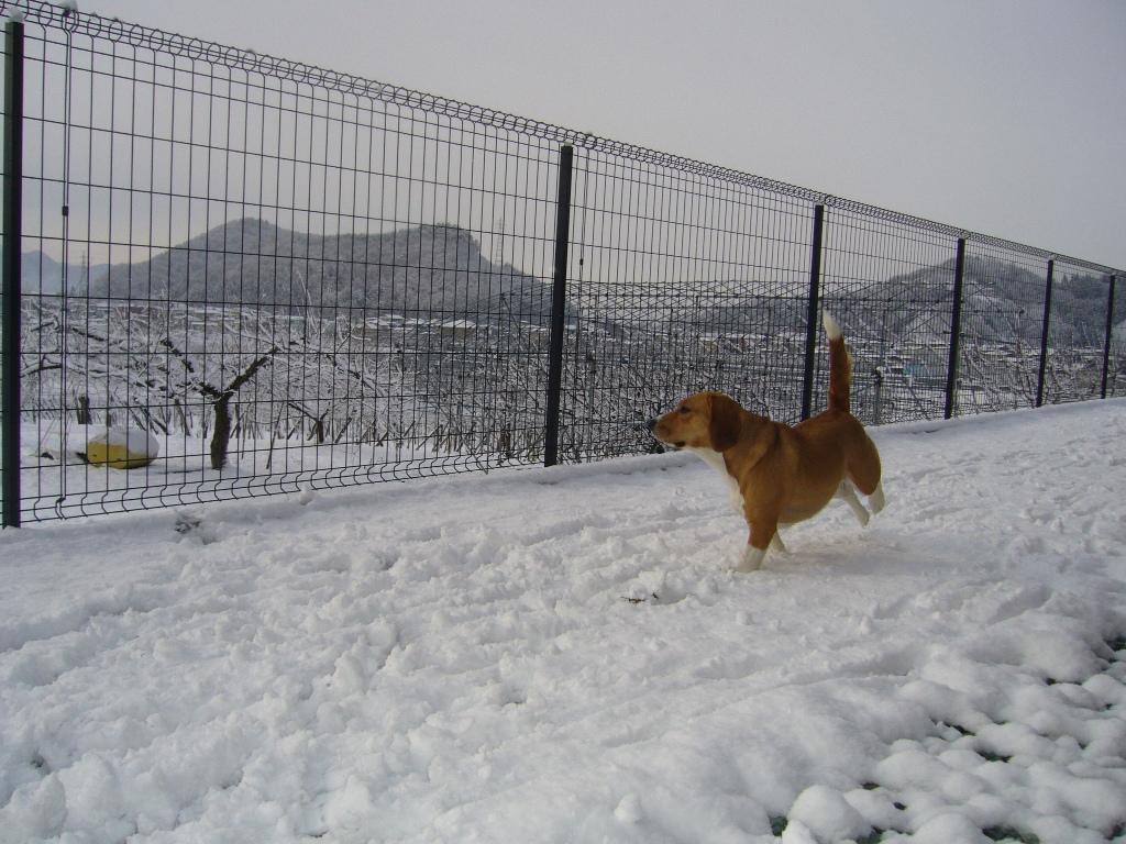 雪がいっぱいだよぉ〜☆