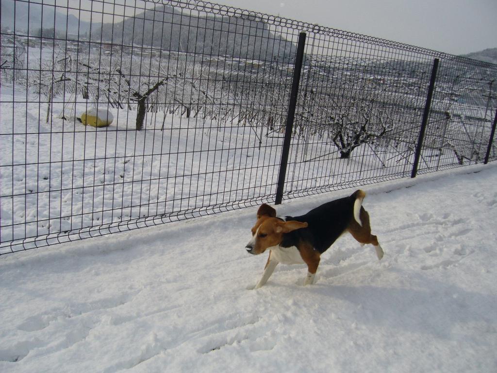 お鼻の雪がチュメタイでしゅ☆