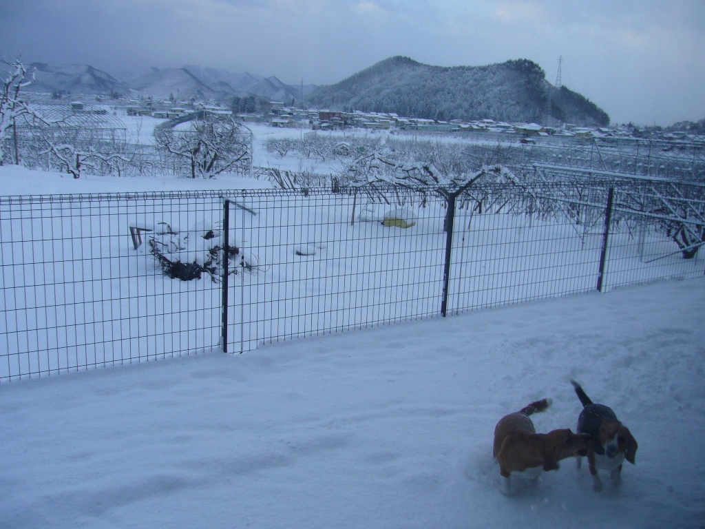 13日の雪模様1