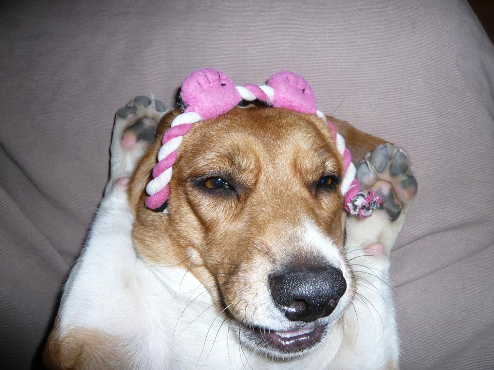 ママ!あたち、ピンクの兎になった?