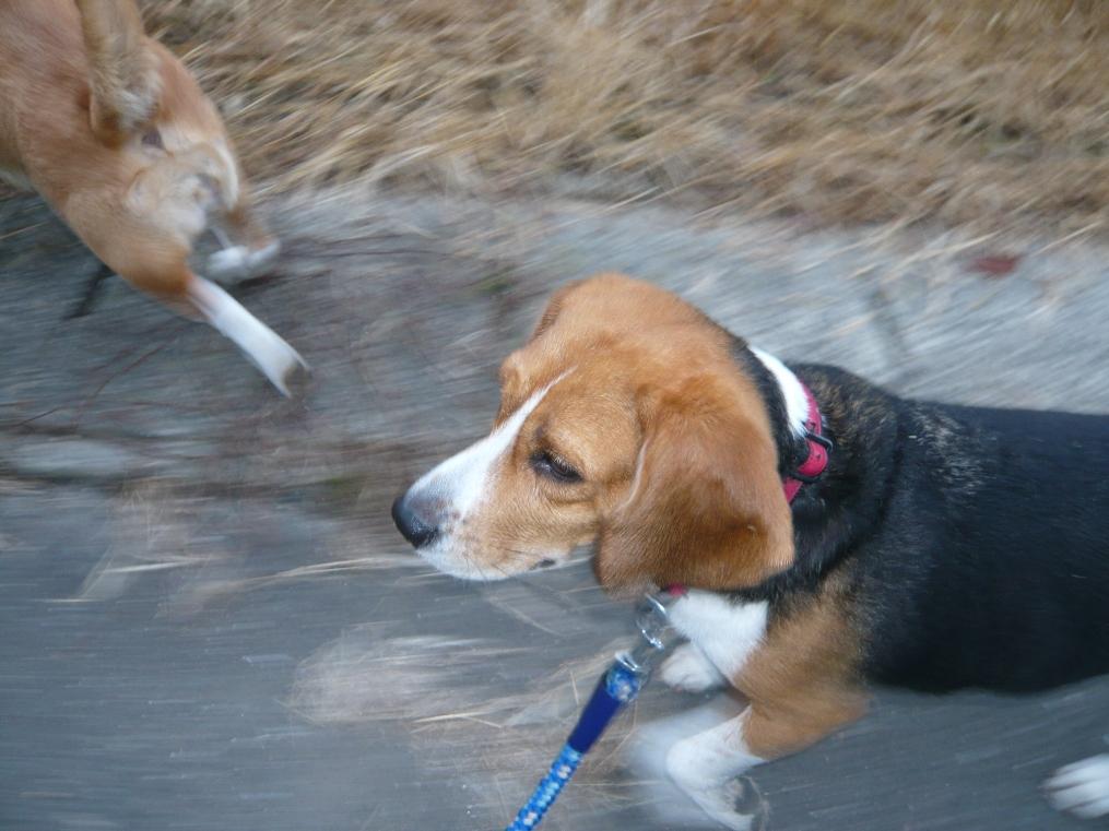 今日も快調な走りのカーラちゃん!