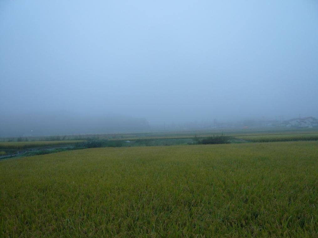 霧が深くなって来たヨ!!