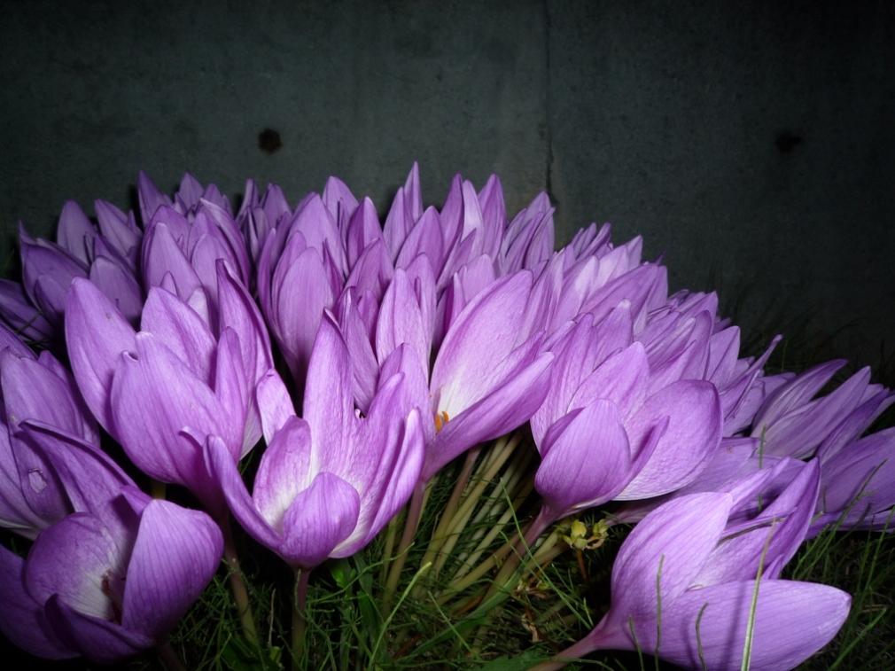今日のお花です