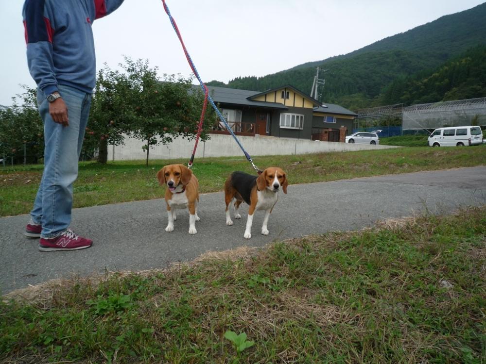 パパとお散歩、何故か固まる!