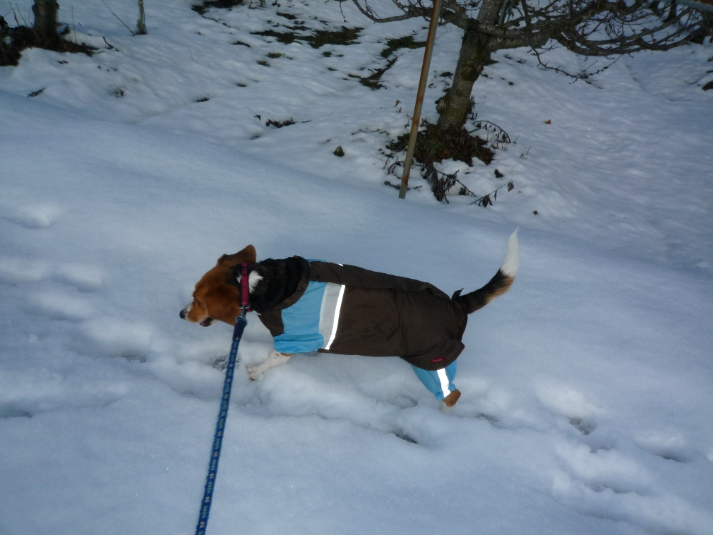 雪じゃぁ〜!