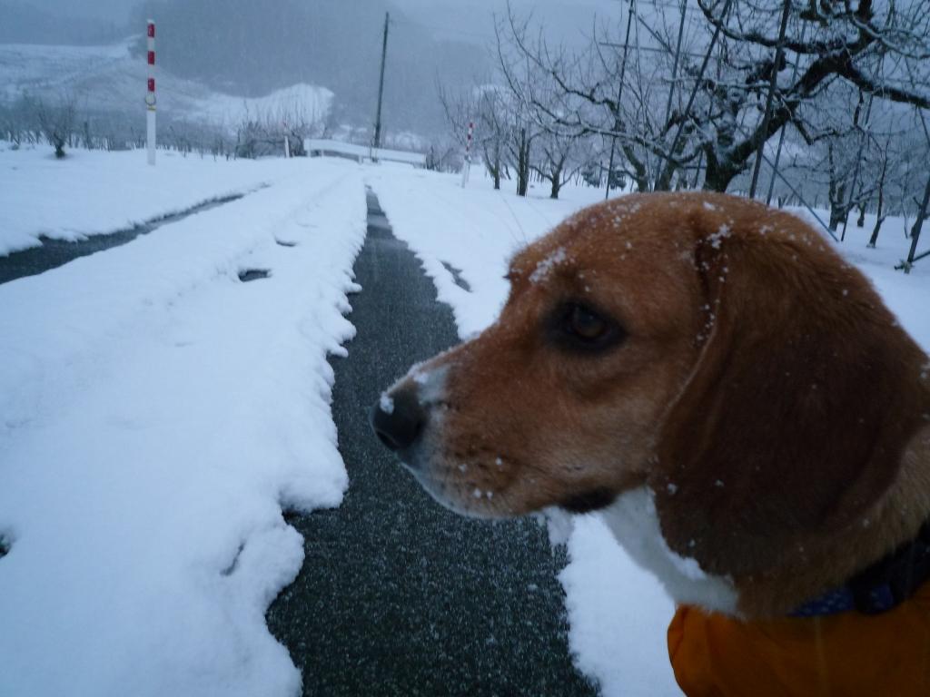 メーラちゃん、ヨダレが凍ってるっ!