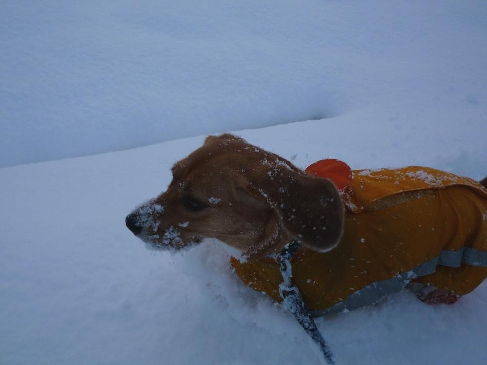 メーラちゃん、雪に埋もれるヨ!