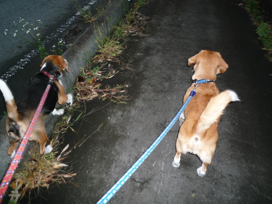 お散歩!GOGO!