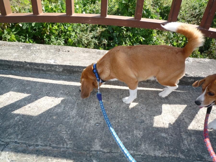 橋の上の狭い歩道!
