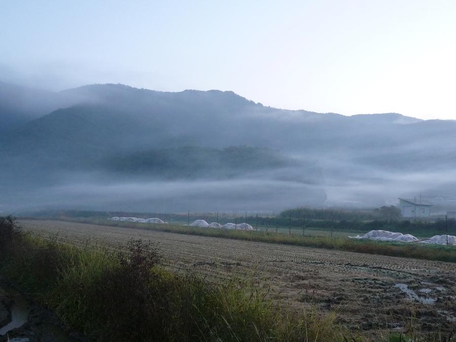 霧かぁ〜?