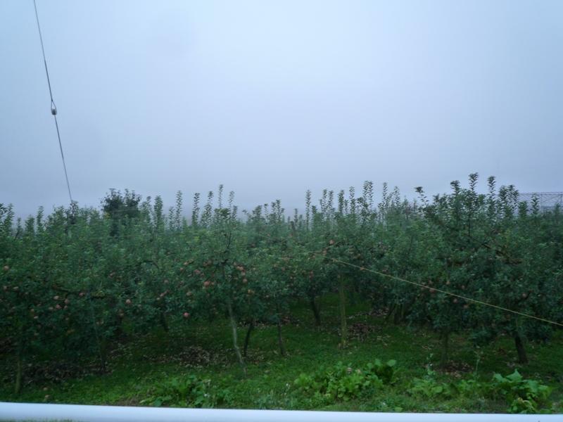 霧に包まれた村♪