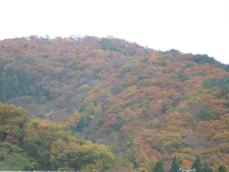 紅葉、綺麗だよぉ〜!
