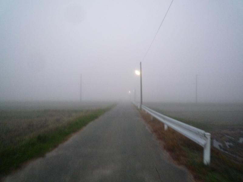 凄い霧の朝です